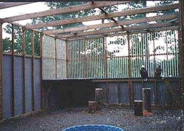 Bald Eagle and Golden Eagle enclosure